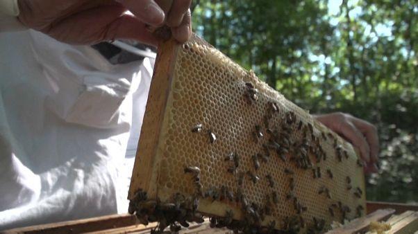 Des abeilles au travail