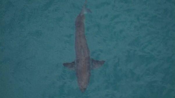 Australie : un surfeur tué par un requin