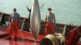 Nehéz helyzetben van a spanyol halászat, az eladás mintegy a felére csökkent