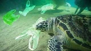 لاک پشتی که پلاستیک میخورد