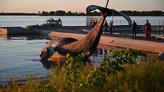 Le cadavre du cétacé retiré des eaux du Saint-Laurent par les garde-Côtes québécois, le 9 avril 2020.