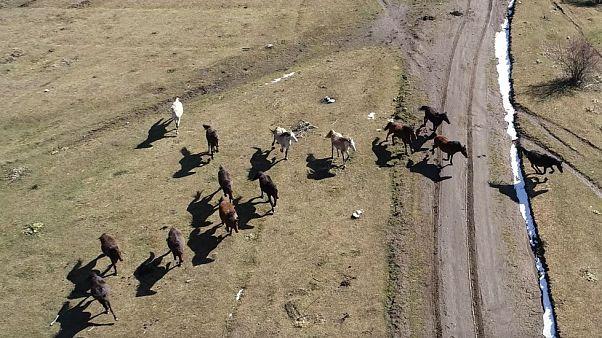 Άλογα Μενοίκιο Όρος