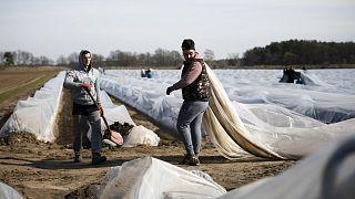 Auch wenn die Spargelernte vorbei ist, brauchen die deutschen Landwirte ausländische Arbeiter