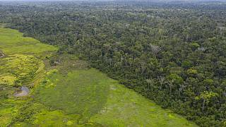 Aerial views of the lush Alto Rio Guama Indigenous Reserve saddled next to a deforested area owned by cattle ranchers, in Para state, Brazil