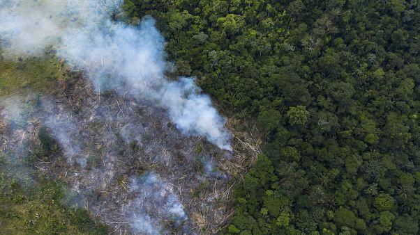 غابات الأمازون/ البرازيل