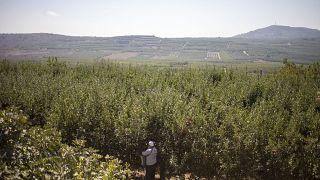 مزرعة في الجولان السوري المحتل - 2019/09/10
