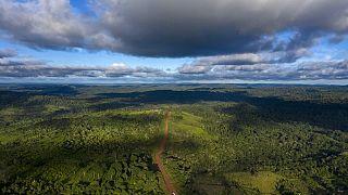 Brezilya Amazon ormanları