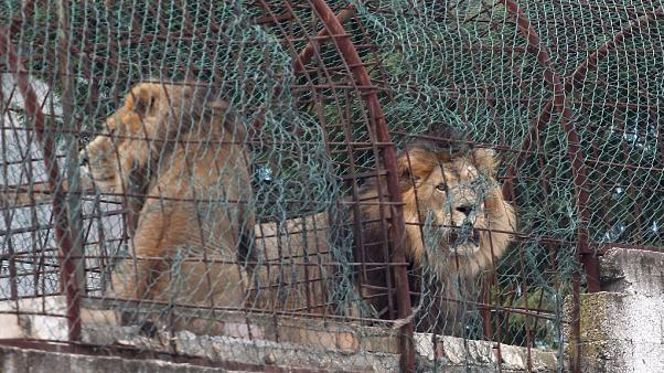 حديقة حيوانات بمبروستار جنوب تيرانا.