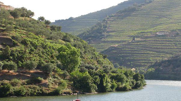 Cruzeiros voltam ao Douro