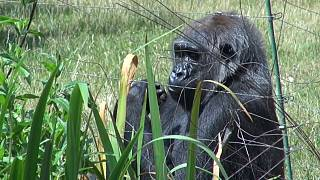 Wegen Corona-Lockdown: Zoo dachte über Notschlachtungen nach