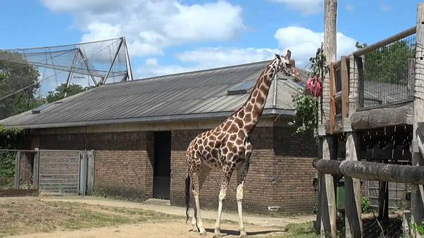 London Zoo, one of the UK's top tourist attraction, has reopened after a three-month lockdown.