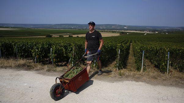 Сбор урожая во Франции