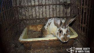 ABD'de 124 hayvan ölümden kurtarıldı