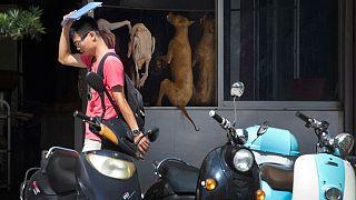 نمایشگاه سالانه گوشت سگ در چین برغم نگرانی فعالان حقوق حیوانات افتتاح شد