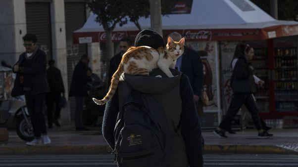 Kedisi ile yürüyen bir adam (arşiv)