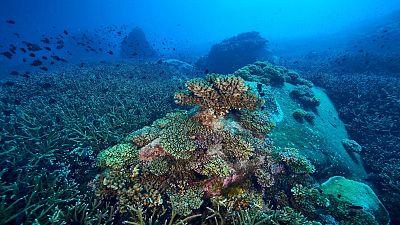 Seafloor