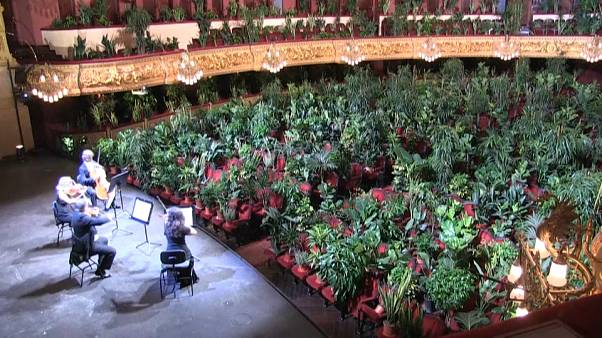 Concert for plants in the Barcelona Opera house