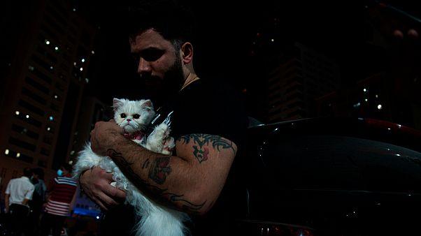 القطط تقلل من فرص الرجال في المواعدة عبر الإنترنت