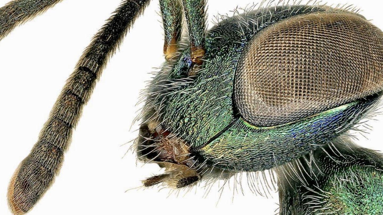Rovar laboratóriumi munka, Entomológus munkaköri leírás: Fizetés, készségek és több - Állat-Karrier