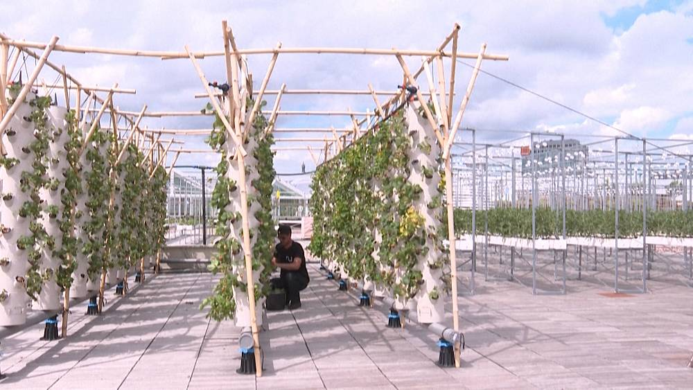 The world's largest rooftop garden has just opened in Paris