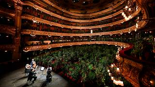 The Uceli Quartet perform Puccini's Crisantemi for more than 2000 plants in Gran Teatre del Liceu (Barcelona opera house) when it reopened after 3 months closure