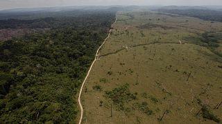 منطقة خالية من الغابات بالقرب من نوفو بروجريسو في ولاية بارا شمال البرازيل