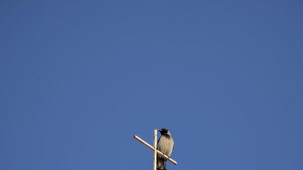 Un pájaro sobre  la cruz del Santo Seplucro en Jerusalén