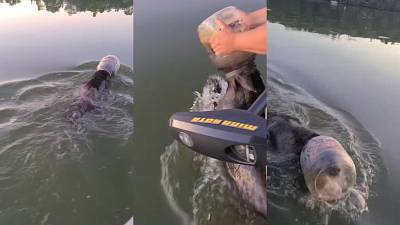 Family rescue a bear trapped in a plastic container in Wisconsin, US