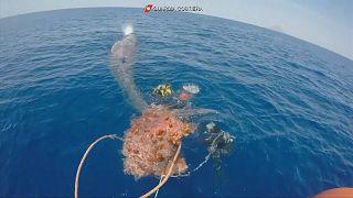 İtalya'da 10 metre uzunluğundaki balina takıldığı balık ağından kurtarıldı