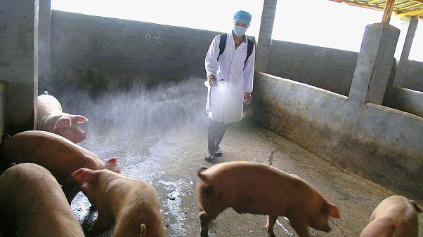 آنفولانزای خوکی در سال ۲۰۰۹ در چین