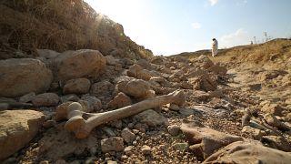 من بقايا إحدى الضحايا في المقبرة الجماعية