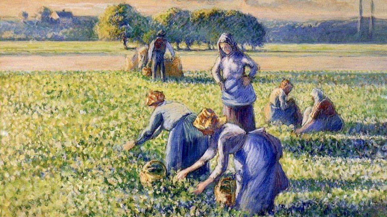 Pissarro: La cueillette des pois (Az aratás) - részlet