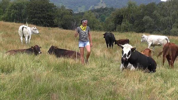 İtalyan gençler çiftçiliğe yöneliyor
