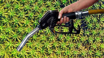 There might be palm oil in your fuel tank