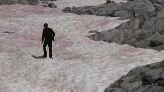 Ροζ πάγος στις ιταλικές Άλπεις - Ανησυχούν οι επιστήμονες