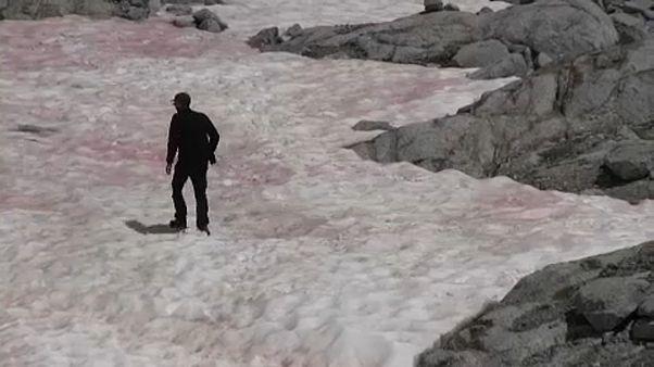 Rosa Färbungen im Gletschereis