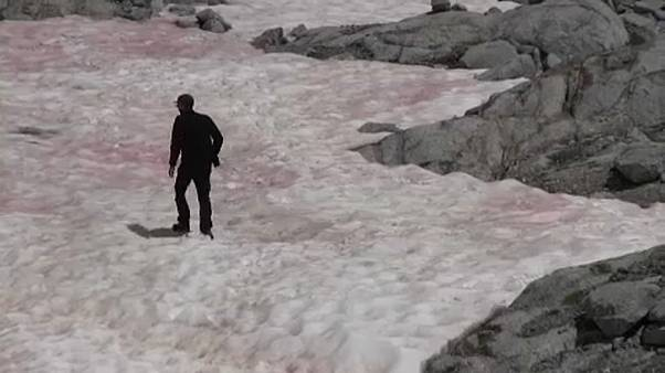 Cientistas investigam gelo cor-de-rosa nos Alpes