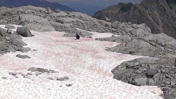 پدیدار شدن یخ صورتی در کوههای آلپ؛ دانشمندان در حال بررسی هستند