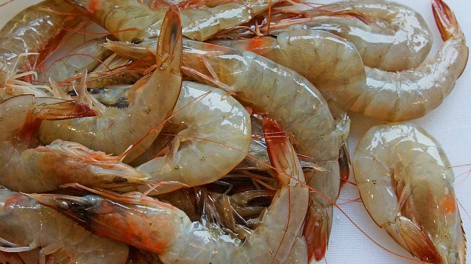 Why shrimps are being turned into batteries to store renewable energy