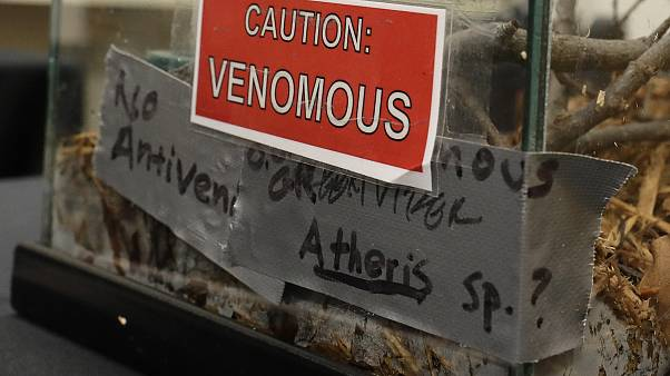 FILE - A sign on a tank containing an African Bush Viper venomous snake at a zoo in the United States.