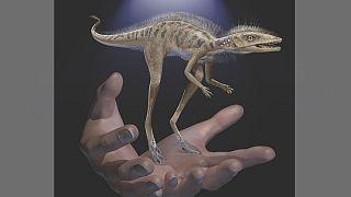 رمزگشایی محققان از فسیل دایناسوری کوچکتر از گوشی تلفن همراه
