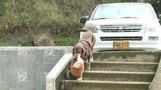 Covid-19 döneminde sahibinin marketinde iş başı yapan köpek Eros