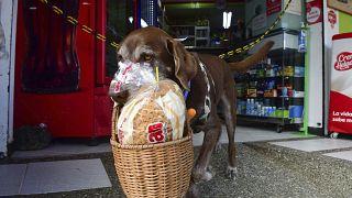 Tierischer Corona-Held: Hund Eros liefert Lebensmittel aus