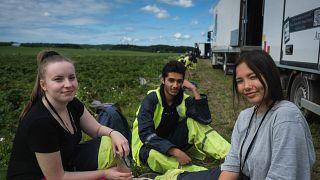 در پی شیوع کرونا، کشاورزان فنلاند برای نخستین بار از کارگران داخلی استفاده کردند