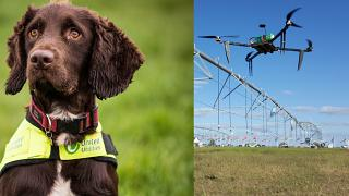 Un aiuto per rilevare le perdite delle reti idriche arriva oggi da cani appositamente addestrati e droni