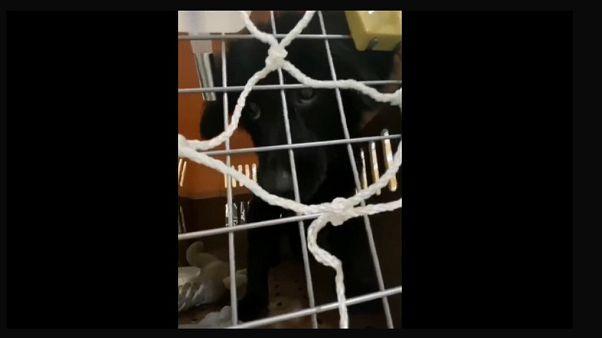 Uno dei cagnolini abbandonati all'aeroporto di Shanghai