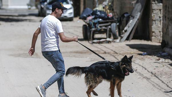 حماس سگگردانی  را ممنوع کرد؛ جریمه  نقدی بیخ گوش خاطیان