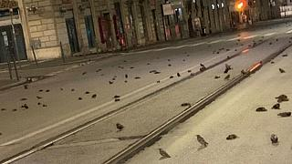 Roma'da havai fişeklerden ölen kuşlar