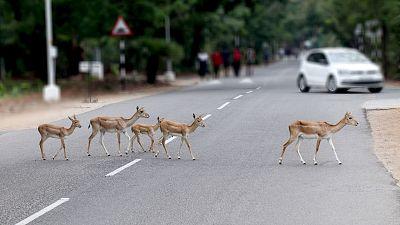 Roads pose a threat to biodiversity.