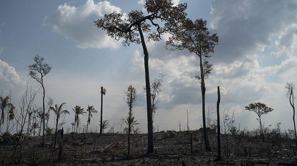 Conséquences de feux de forêts, près de Novo Progresso (État du Pará, Brésil), le 25/08/2019